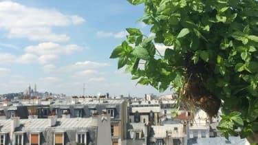 Sur le toit d'un bâtiment RATP, une start-up a installé des cultures d'herbes aromatiques.
