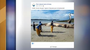 La baleine échouée sur la presqu'île de Crozon.