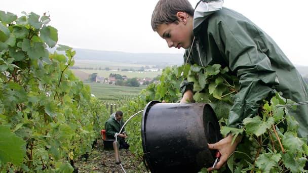 Deux travailleurs portugais accusent des viticulteurs de l'Aude de les avoir fait travailler tout l'hiver, de novembre 2012 à avril 2013, « sauf les jours de pluie », pour 700 € par mois.