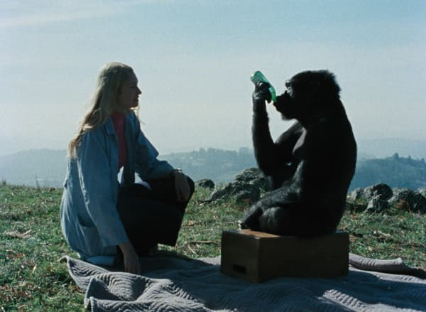 """Koko, le gorille qui parle"""