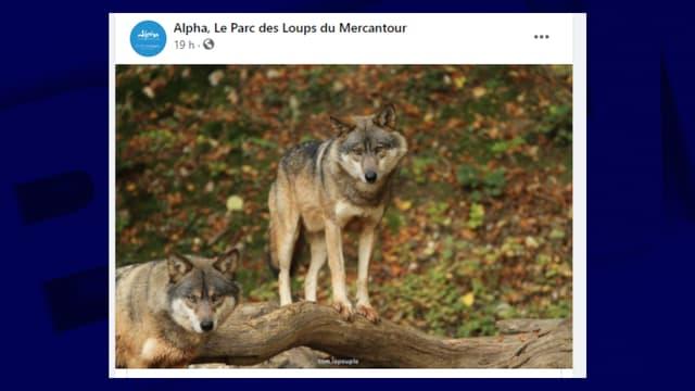 Le Parc Alpha rouvre ce mercredi 14 juillet.