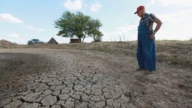A cause de la sécheresse, le prix du maïs a augmenté de 50% depuis le mois de mai et celui du soja de 26%.