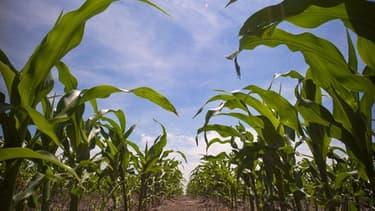 Deutsch Bank remet sur le marché des produits dérivés agricoles, une activité désignée par des ONG comme un des facteurs de la faim dans le monde
