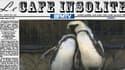 Une histoire d'amour entre deux pingouins femelles? C'est le cas au zoo de Tel Aviv.