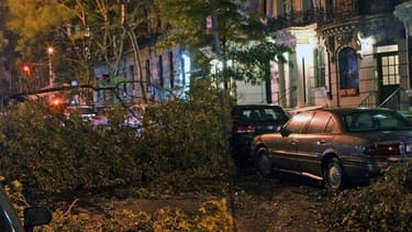 L'ouragan Sandy a également dévasté un grand nombre d'arbres dans les parcs New Yorkais
