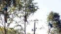 En septembre 2014, des opposants au projet de barrage se sont nichés dans les arbres pour empêcher sa construction.