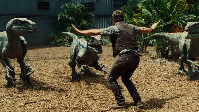Dans Jurassic World, Chris Pratt tente d'apprivoiser des vélociraptors.