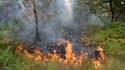 Au moins 330 hectares de forêt ont pris feu depuis vendredi en Gironde.