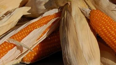Les autorisations de culture OGM sont actuellement délivrées par l'UE.