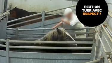 Trois millions d'animaux sont abattus chaque jour.