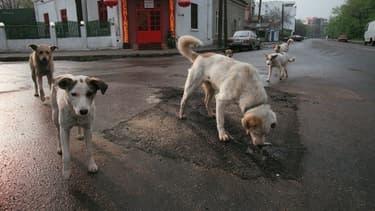 Les chiens errants sont un problème endémique dans les pays des Balkans.Image d'illustration.