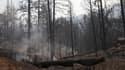 Le parc de Yosemite avait été touché par un immense incendie en 2013, qui s'était étendu sur plus de 100.000 hectares.