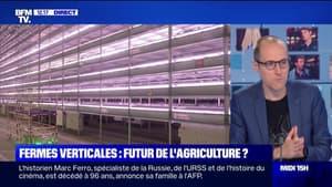 Agriculture: pourquoi les fermes verticales gagnent-elles en popularité?