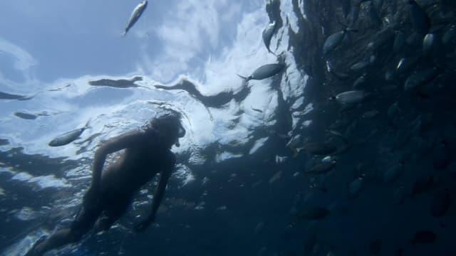 Un plongeur a été retrouvé mort au fond d'une fosse d'entraînement d'un centre de plongée sous-marine de Haute-Savoie. Photo d'illustration