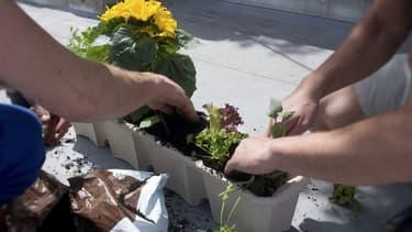 En s'adonnant au jardinage, les salariés font baisser leur niveau de stress mais créent aussi de nouveaux liens.