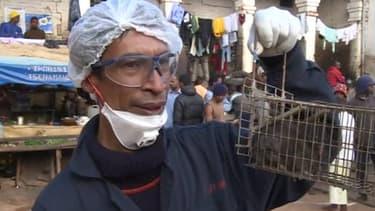 Campagne de dératisation du CICR dans une prison malgache