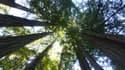 Une forêt californienne (Photo d'illustration).