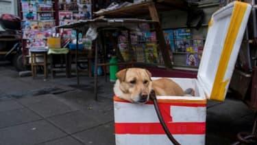 L'attitude envers les animaux a évolué en Chine alors que le nombre d'animaux domestiques augmente et que la classe moyenne se développe rapidement