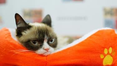 photo de Grumpy Cat prise le 15 juillet 2014