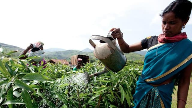 Depuis la création du Fonds Livelihoods, 30 000 hectares d'arbres ont été replantés