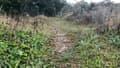 À Carrières-sous-Poissy, certains sols contiennent une forte concentration en plomb.