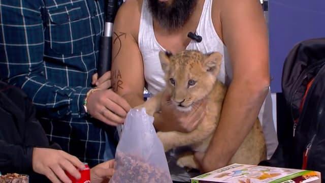 """Le lionceau présenté dans """"Clique"""""""