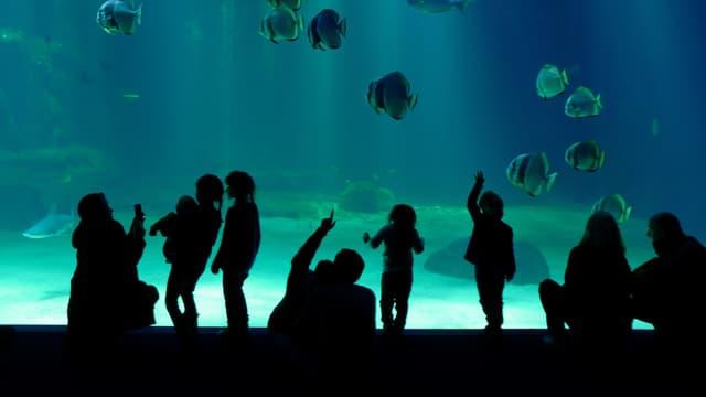 Boulogne-sur-Mer: reprise estivale en demi-teinte pour l'Aquarium Nausicaa