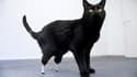 Oscar, un chat de deux ans amputé des deux pattes arrière en Angleterre après être passé sous une moissonneuse-batteuse, peut de nouveau marcher après une greffe de membres artificiels. /Photo prise le 25 juin 2010/REUTERS/HO