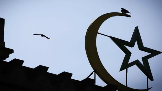 Un oiseau survole la Grande Mosquée de Paris.