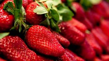 Les fraises françaises doivent redevenir les préférées des... Français.