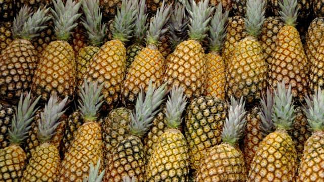 Le cuir d'ananas, une nouvelle matière innovante