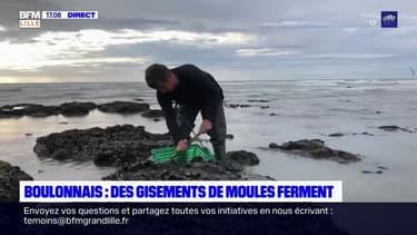 Côté d'Opale: les pêcheurs de moules inquiets après la fermeture de gisements