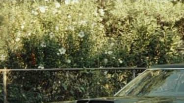 Derrière la Mustang, la Gran Torino est l'autre muscle car de Ford.