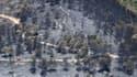 Une forêt brûlée à Carnoux-en-Provence