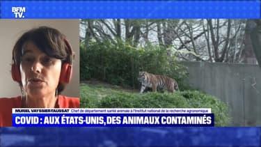 Covid : aux Etats-unis, des animaux contaminés - 19/09