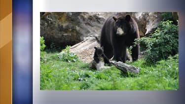 Les deux oursons sont sortis de leur tanière
