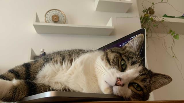 45% des animaux de compagnie français sont des chats