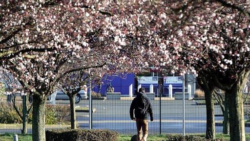 Des arbres en pleine floraison, photo prise le 26 février à Lomme dans le Nord