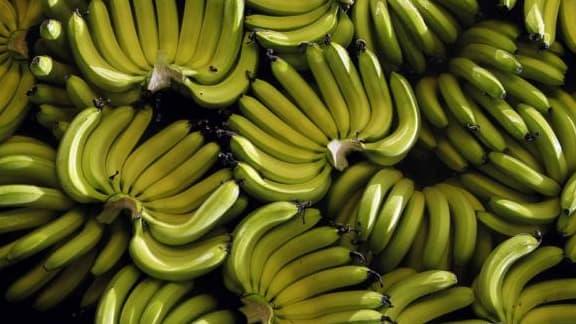 110 millions de tonnes de bananes ont été récoltées en 2012.