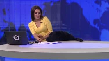 Une présentatrice interrompue par un chien en plein direct