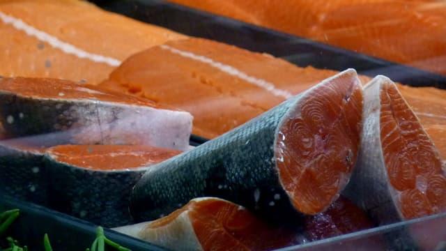 Saumon canadien. (illustration)