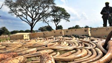 Photo prise en août dernier près de Nairobi au Kenya d'un garde chargé de veiller sur un butin d'ivoire confisqué après un assaut de la veille.