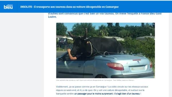 Copie d'écran France Bleu Gard Lozère - Un taureau dans une décapotable en Camargue