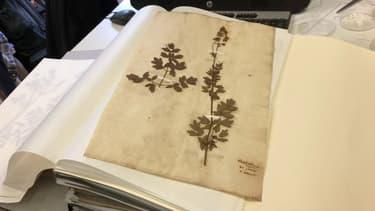 Dans les coulisses de la Tête d'Or: à la découverte des herbiers du parc