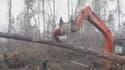 L'orang-outan contre le bulldozer.