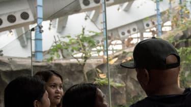 Des touristes prennent connaissance de la mort de Jia Jia devant ce qui était son ancien enclos.
