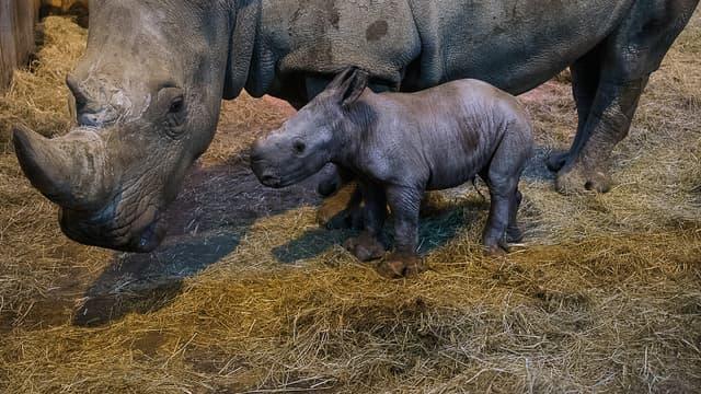 Le petit Timbo, en pleine forme, le 14 mars avec sa maman.