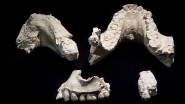 Des fragments de mâchoire d'Australopithecus deyiremeda