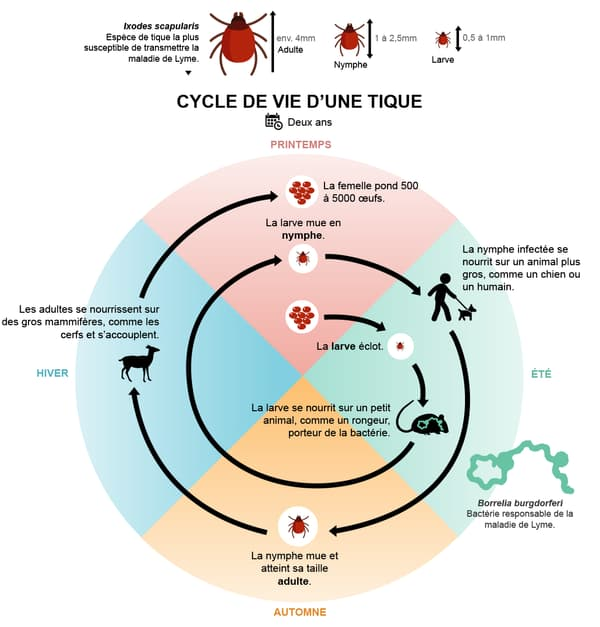 infographie tique