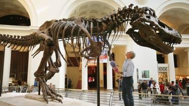 Image d'illustration -  Un T-Rex exposé au musée de Chicago (Etats-Unis) en 2007, au côté du géologiste Bill Simpson.